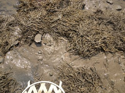 the mud flats beneath chair at low tide